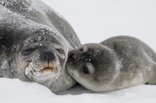 Seals-988010_1920